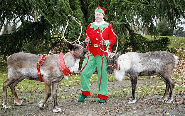 Reindeer Antler Inspection at London Zoo - Photocall